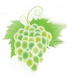 Виноград и домашнее вино