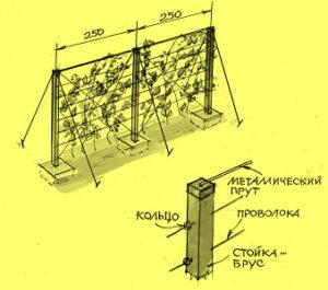 Схема шпалеры для посадки винограда