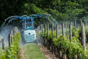 Обработка винограда ранней весной после распускания почек