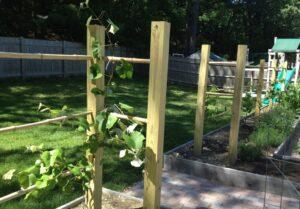 Шпалеры для виноградника из дерева