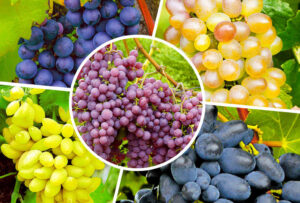 польза винограда для организма