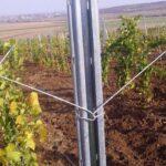 Как правильно выбрать стойки для винограда?