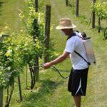 Проблемы винограда и его профилактика