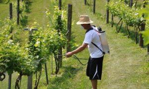 Решение проблем винограда весной