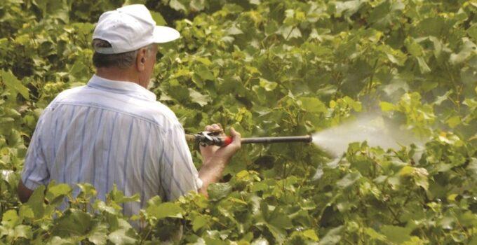 Схема обработки виноградника от болезней и вредителей