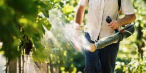 Избавляемся от насекомых на винограде