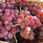 Как посчитать урожайность винограда с куста?