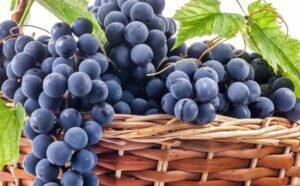 Урожайность винограда с куста