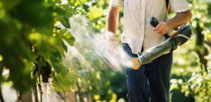 внекорневая подкормка винограда во время наливания ягод